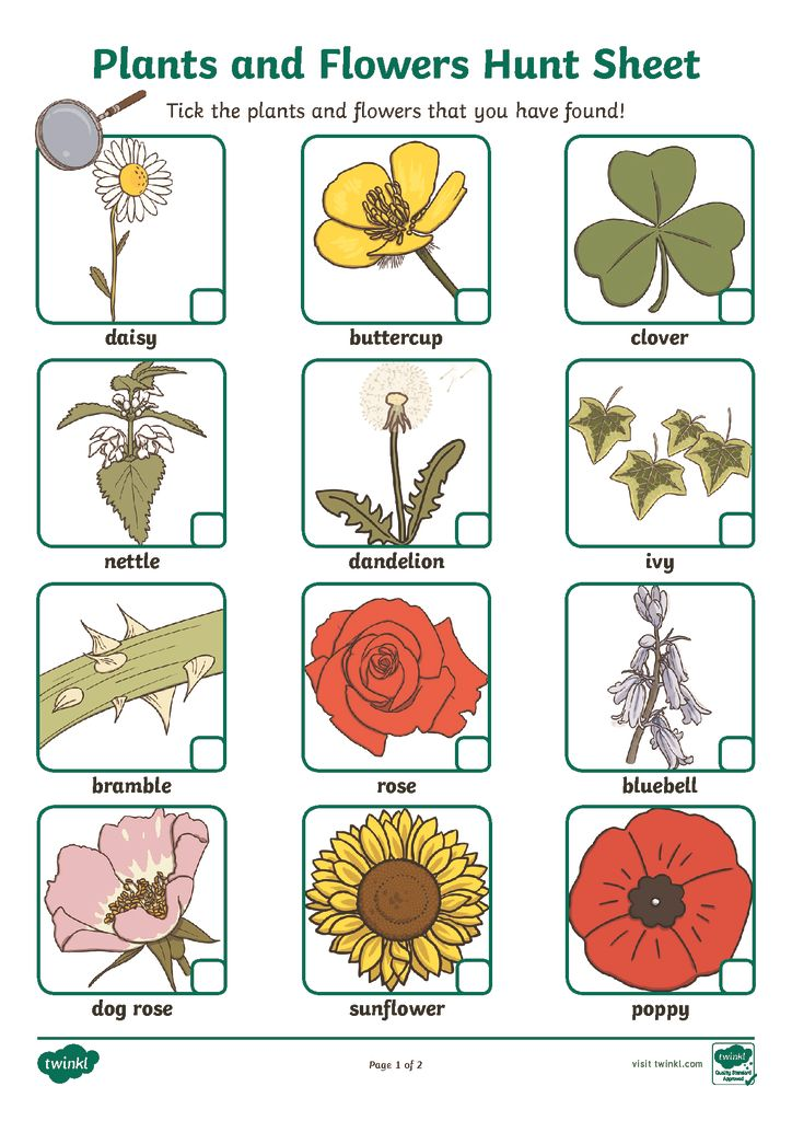 thumbnail of t-t-1103-plants-and-flowers-hunt-sheet-_ver_5